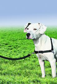 no-pulling-dog-leash